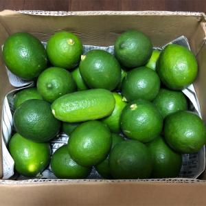 【済陽式食事療法】メルカリでマイヤーレモンを買いました!