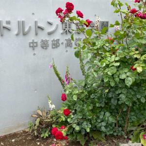 ドルトン東京学園中学校の見学に行ってきた!