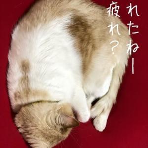 ひとりでもなんとかなりそうでふ(^▽^)/