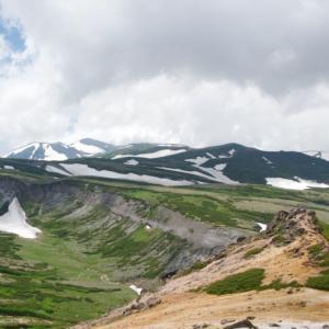 赤岳の花 山頂付近編