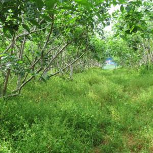 当園は農薬・除草剤を撒きません