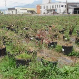 栽培仲間の農園