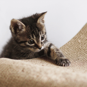 【猫の爪とぎのしつけ】正しく理解して猫と気持ちよく暮らそう!