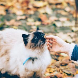 【猫が好きな食べ物と危険なもの】正しい与え方や体に良い物を紹介!!