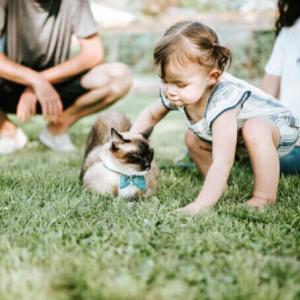 猫は好きな人がわかる!?初めて会うのに特定の人に懐く理由大公開!!