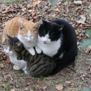 【猫の好きな場所はどこ?】ポイントをおさえて充実した環境を作ろう