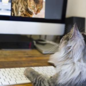 【猫の好きな動画3選】つい夢中になって遊ぶ映像を見つけよう!