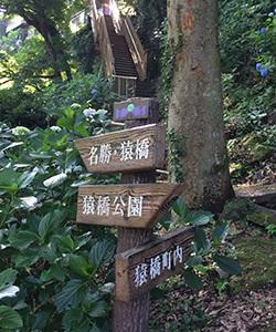 立ち寄り情報 紫陽花狩りの穴場? 猿橋公園-山梨県-