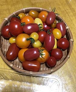 ちょこっと動画アップ フルーツトマト狩り