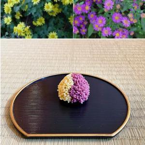 寒露 菊の花開く
