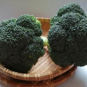 ブロッコリーで痩せる方法、ブロッコリーダイエットについての紹介!