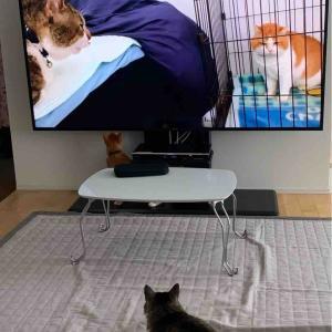 TV大きくなった!