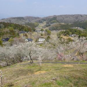 岡山県津山市にある西日本最大級の梅の里公園へ訪れる(旅その1)