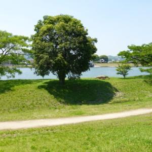 梅雨の晴れ間にサイクリング、岡山市東区の吉井川や緑地を巡る旅