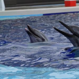 癒しの空間、イルカショーも楽しめる「四国水族館」の見所と魅力とは