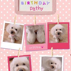 愛犬の13歳の誕生日に思うこと。