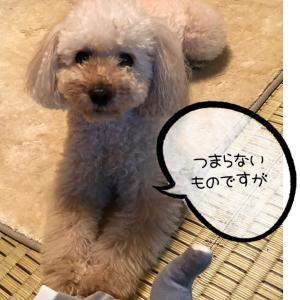 ワンコを飼って金銭感覚が麻痺(*_*)
