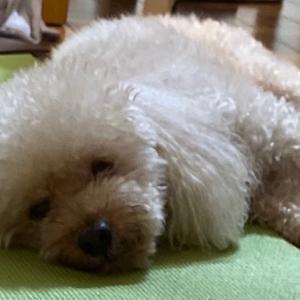 金食い虫ならぬ金食い犬(´ω`)