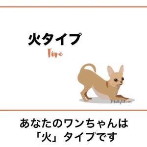 東洋医学でわかる愛犬の性格診断。