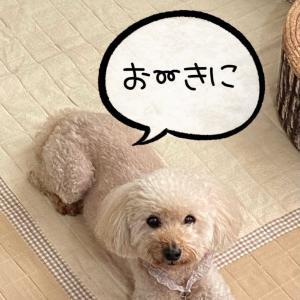 愛犬のブログで伝えたかった2つのこと。