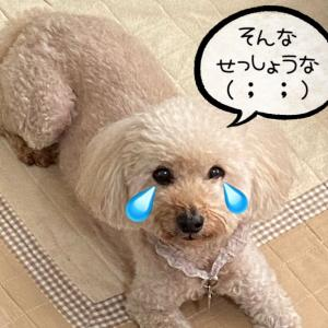 愛犬の下痢に動じなかった私(^o^)