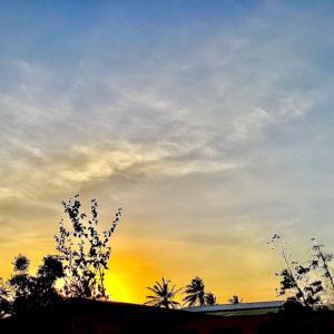 夕陽に舞うエメラルドハミングバード(緑ハチドリ)~♡~4.20