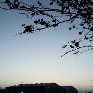 アルバ島『トワイライトアワー』~♡~4.22