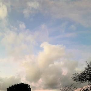 「月浮かぶ 朝焼け空に 渡り鳥」~♡~05.29