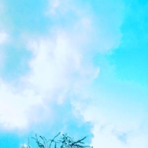 今朝の裏庭物語 ~♡~06.21