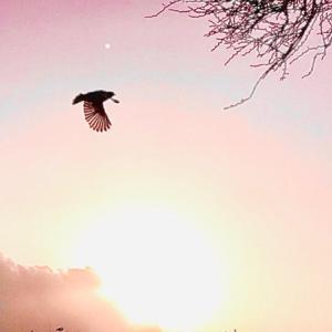メッセンジャー♫の飛ぶ空景色~7.21