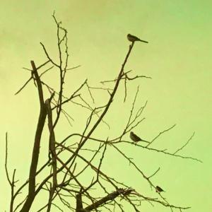 鳥のいる風景~8.21/22 (8月の朝空)