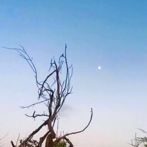 お天道様とお月様のバトンタッチ~☆~9.17/18【南カリブ海アルバ島】