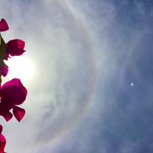 中秋のハロと........~☆~9.20/21【南カリブ海アルバ島】