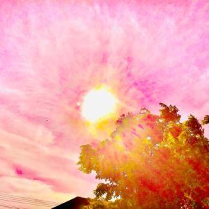 昼下り 天に咲くかな 秋桜~☆~9.23/24【南カリブ海、アルバ島】