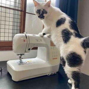 お裁縫と猫