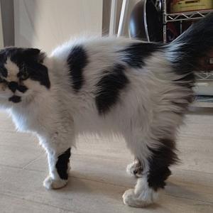 【猫の里親②】自転車置き場に捨てられていた猫をひきとりました