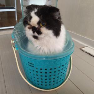 【猫の里親⑤】自転車置き場に捨てられていた猫をひきとりました