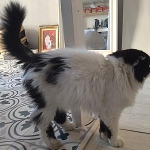 【猫の里親⑦】自転車置き場に捨てられていた猫をひきとりました