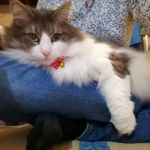 ダイソーの猫首輪に連絡先を書いて迷子札を代用【100均の裏技】