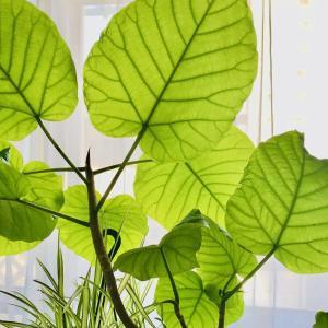 観葉植物のすすめ