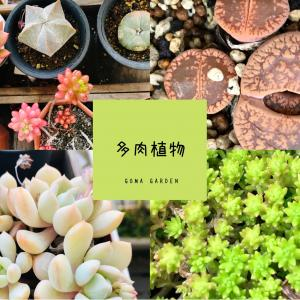 野生の多肉植物