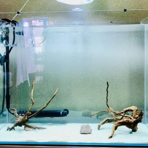 熱帯魚水槽の選び方