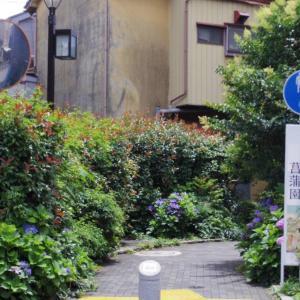 堀切菖蒲園のハナショウブ