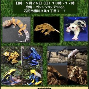 あつまれえきぞちっくの集いin石狩 爬虫類イベント北海道