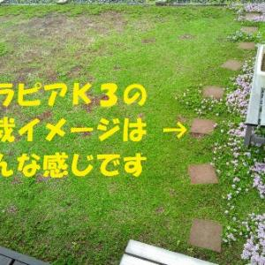 ピンク花の新品種クラピアK3の植栽イメージ