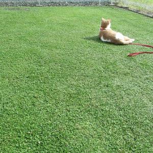 猫と一緒にアーシングを楽しむならクラピア庭