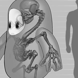 頭が人間「Falls  Guys」衝撃的過ぎるFall Guyの公式骨格