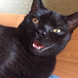 鶴の恩返しはあるが黒猫の仕返し😂😂😂
