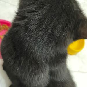 黒猫さんに.°ʚ  ɞ°.羽