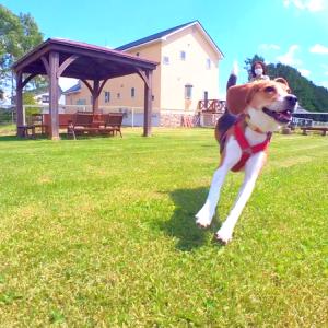 犬連れの休日 ランチとドックラン巡り